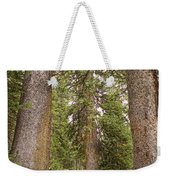 Rocky Mountain Forest Walk Weekender Tote Bag