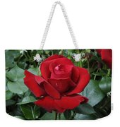 Rose Rosa Sp Ingrid Bergman Variety Weekender Tote Bag