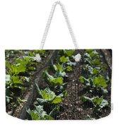 Rows Of Cabbage Weekender Tote Bag by Anne Gilbert