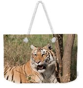 Royal Bengal Tiger Inside The Delhi Zoo Weekender Tote Bag
