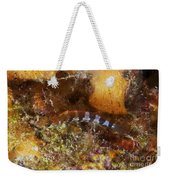 Saddled Blenny, Bonaire, Caribbean Weekender Tote Bag