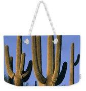 Saguaro Cacti In Desert Landscape Weekender Tote Bag