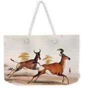 Sassaby And Hartebeest, Weekender Tote Bag