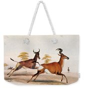 Sassaby And Hartebeest, Weekender Tote Bag