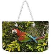 Scarlet Macaw Ara Macao Adult Perching Weekender Tote Bag