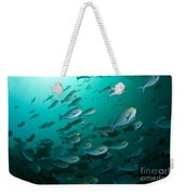 School Of Yellow Masked Surgeonfish Weekender Tote Bag