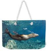 Sea Lion Blowing Bubbles, Los Islotes Weekender Tote Bag