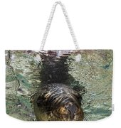 Sea Lion Portrait, Los Islotes, La Paz Weekender Tote Bag by Todd Winner