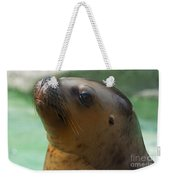 Sea Lion Up Close. Weekender Tote Bag