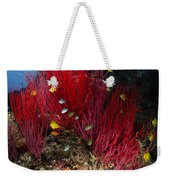 Sea Whips And Soft Coral, Fiji Weekender Tote Bag