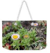 Seaside Fleabane Flowers Weekender Tote Bag