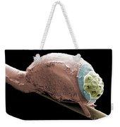 Sem Of A Head Lice Eggs Weekender Tote Bag by Ted Kinsman