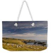 Sheep Grazing In Headland Weekender Tote Bag