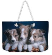 Sheltie Puppies Weekender Tote Bag by Photo Researchers, Inc.
