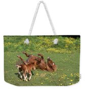 Shetland Pony And Foal Playing Weekender Tote Bag