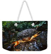 Short-tailed Crab Potamocarcinus Sp Weekender Tote Bag