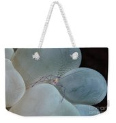 Shrimp On Bubble Coral, Indonesia Weekender Tote Bag