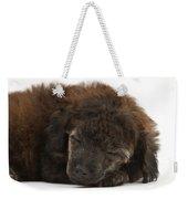 Sleeping Puppy Weekender Tote Bag