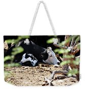 Sleepy Arizona Cows Weekender Tote Bag