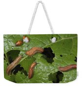 Slugs And A Snail Are Feeding On Leaves Weekender Tote Bag