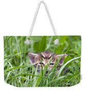 Small Kitten In The Grass Weekender Tote Bag
