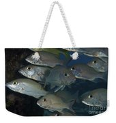 Small School Of Mahogany Schnapper Weekender Tote Bag by Terry Moore