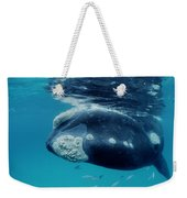 Southern Right Whale Australia Weekender Tote Bag