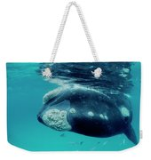 Southern Right Whale Eubalaena Weekender Tote Bag