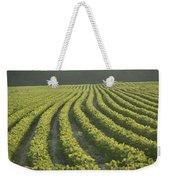 Soybean Crop Ready To Harvest Weekender Tote Bag