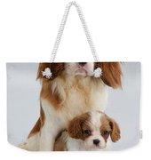 Spaniels Weekender Tote Bag by Jane Burton