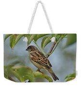 Sparrow I Weekender Tote Bag