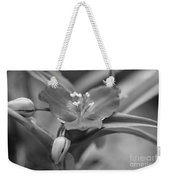 Spiderwort In Black Weekender Tote Bag