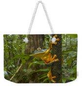Splendid Leaf Frog  Costa Rica Weekender Tote Bag