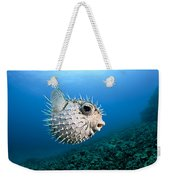Spotted Porcupinefish Weekender Tote Bag