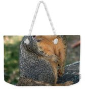 Squirrel Looking For A Hand Out Weekender Tote Bag