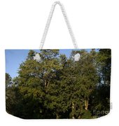 Stand Of Sugar Maple Trees Weekender Tote Bag