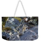 Straight Tailed Chipmunk On A Rock Weekender Tote Bag