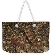 Striated Goby And Blind Shrimp, North Weekender Tote Bag