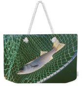 Striped Bass In Net.  The Fish Weekender Tote Bag