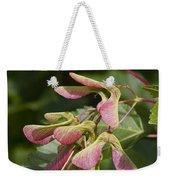 Sugar Maple Acer Saccharum Seed Pods Weekender Tote Bag