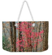 Sumac In Morning Light At Cumberland Falls State Park Weekender Tote Bag