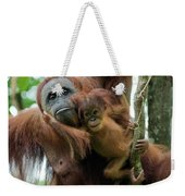 Sumatran Orangutan Pongo Abelii Mother Weekender Tote Bag