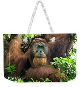 Sumatran Orangutan Pongo Abelii Weekender Tote Bag