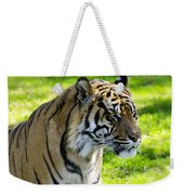 Sumatran Tiger Portrait  Weekender Tote Bag