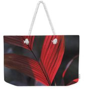 Sunlight Illuminates The Red Leaves Weekender Tote Bag