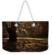 Sunlight In Trees Weekender Tote Bag