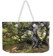 Sunstar Oak Weekender Tote Bag