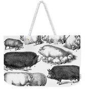 Swine, 1876 Weekender Tote Bag by Granger