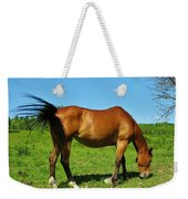 Tail Swatting Flies Weekender Tote Bag