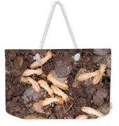 Termite Nest Reticulitermes Flavipes Weekender Tote Bag by Ted Kinsman